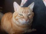 gato 10